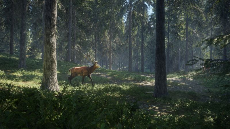 Охота для PS4 (Hunter call of the wild PS4)